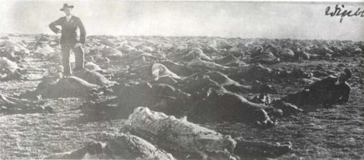 Anglo boere oorlog perde