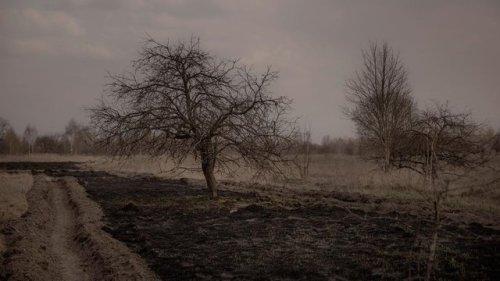 Chernobyl Dead Trees - Photo By Beatrice Lundborg www.RadioactiveChat.Blogspot.com.jpg