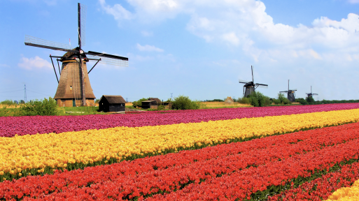 Image result for How The Netherlands Became The World's Second Largest Agricultural Exporter
